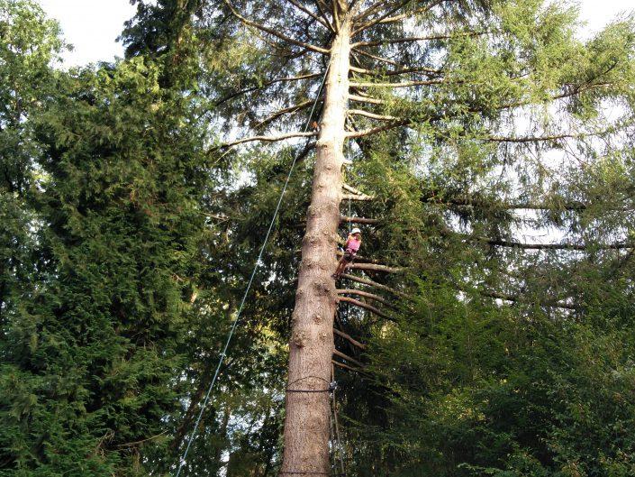 Climbs trees